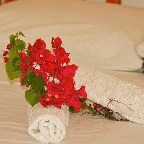 www.lagalette.net - Marie-Galante Authentique - Tropic Beauty