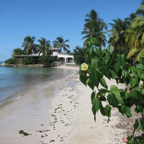 Location Villas Marie Galante - Villa Cycas